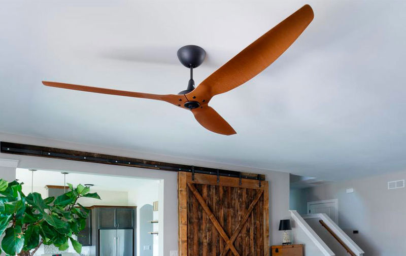 Cheeky Oversized Ceiling Fans