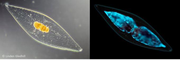 Bioluminescent aquarium designs bioglo - Bioluminescent aquarium ...