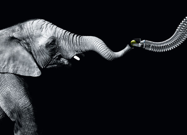 Elephant-Like Robotic Arms