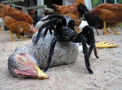 Spider Mania