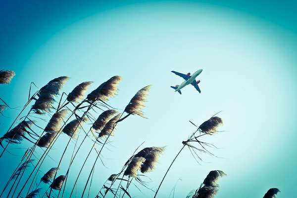 Airplane Prey Photography