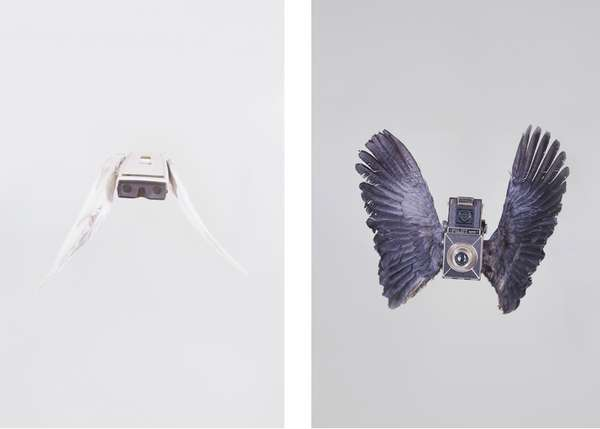 Feathered Camera Prints