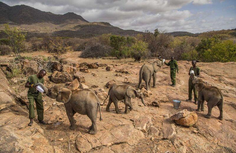 Orphaned Elephant Calves Initiatives