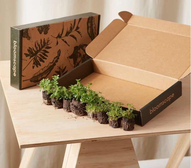 Curated Plant Kits