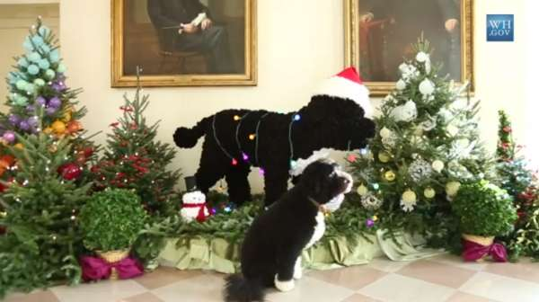 Merry Presidential Pooch Videos