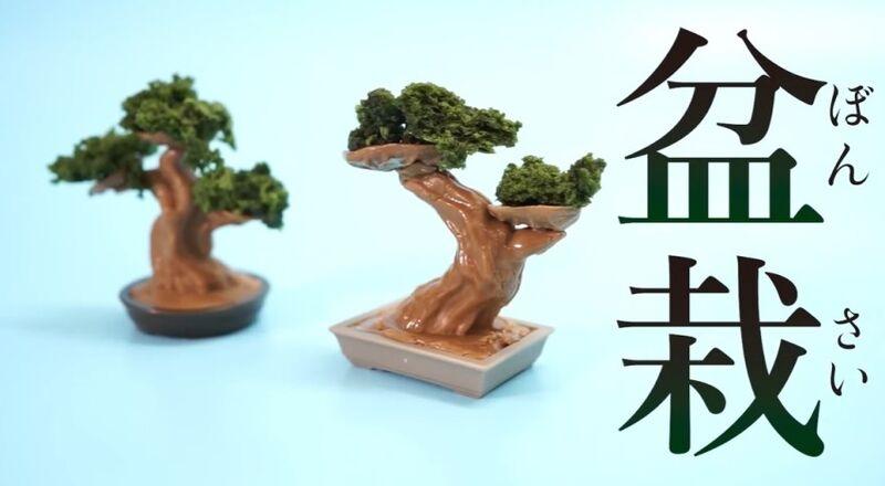 Edible Bonsai Tree Kits