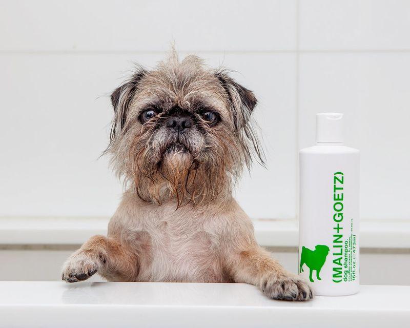 Luxe Botanical Dog Shampoos