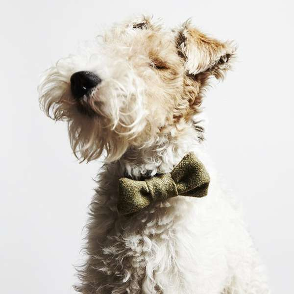 Luxurious Doggy Bow Ties
