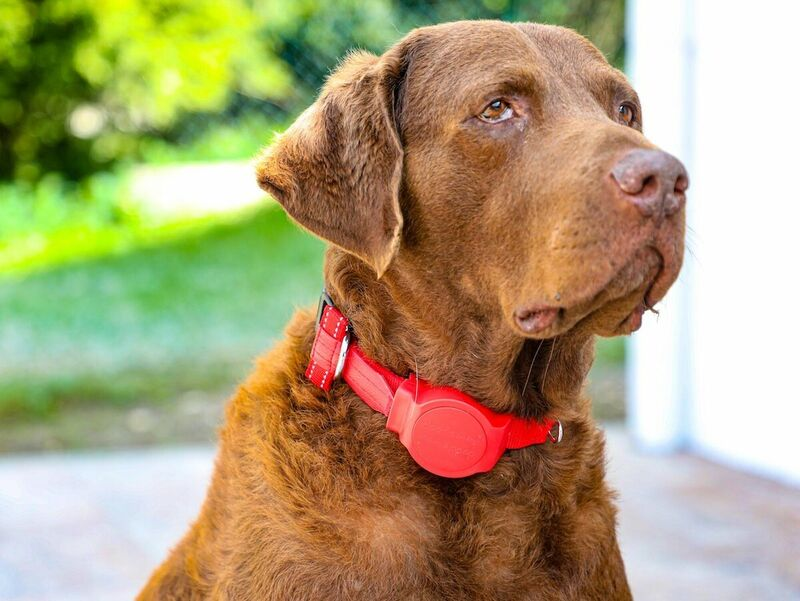 Leash-Equipped Dog Collars