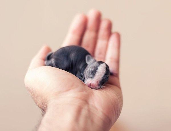 Baby Bunny Portraits