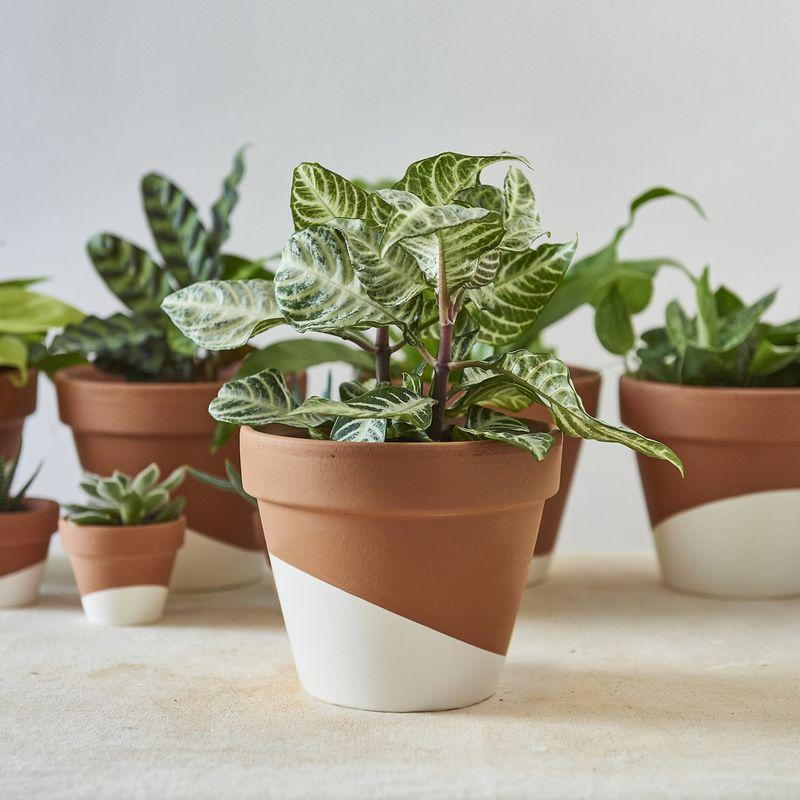 Whole-Home Houseplant Sets