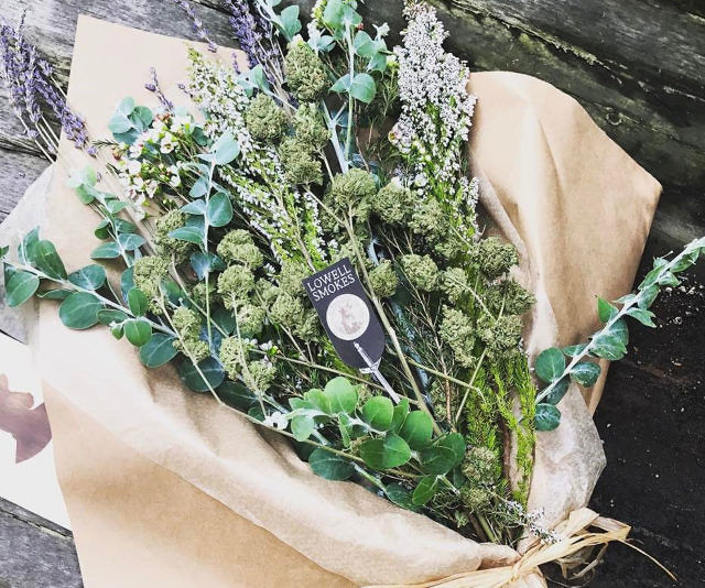 Have you seen these marijuana bouquets? They are a beautiful arrangements of traditional flowers coupled with the dead dry buds of marijuana.