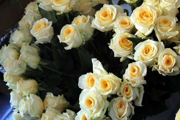 Haute Bloom Boutiques