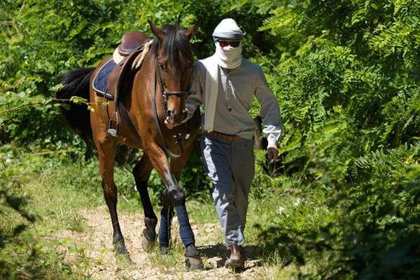 Curious Equestrian Lookbooks