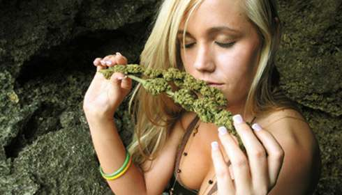 Cannabis Caviar