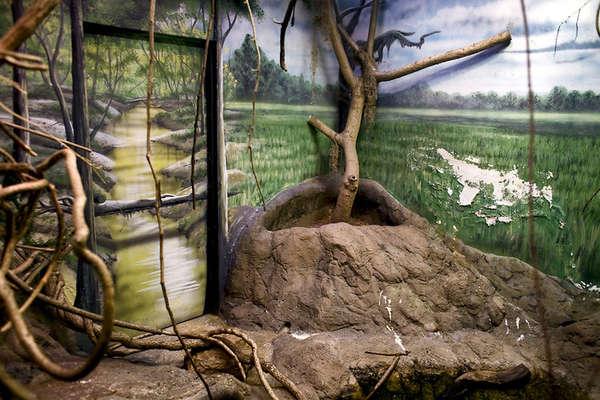 Zoo Habitat Photography