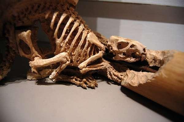 Carved Skeletal Creatures