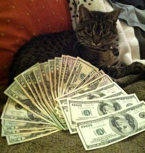 Filthy Rich Felines