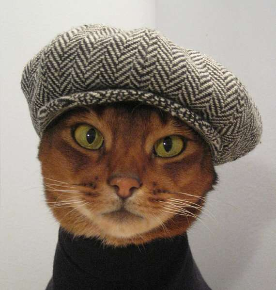 French Feline Attire