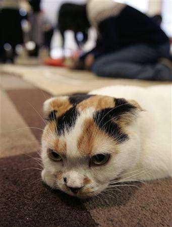 Coffee Shop Kitten Rentals