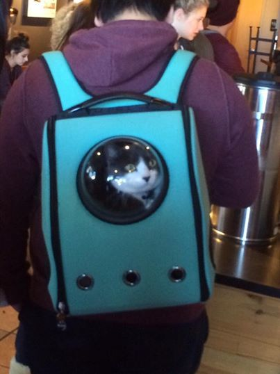 Spaceship-Like Cat Carriers
