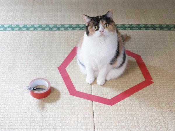 Simple Pet Traps