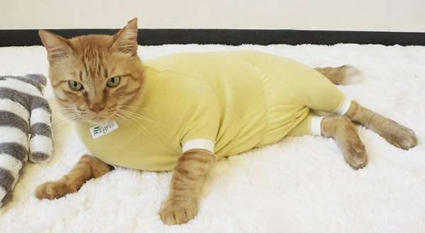 Protective Pet Pajamas