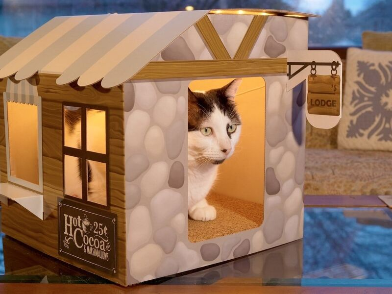 Cat House Subscription Services