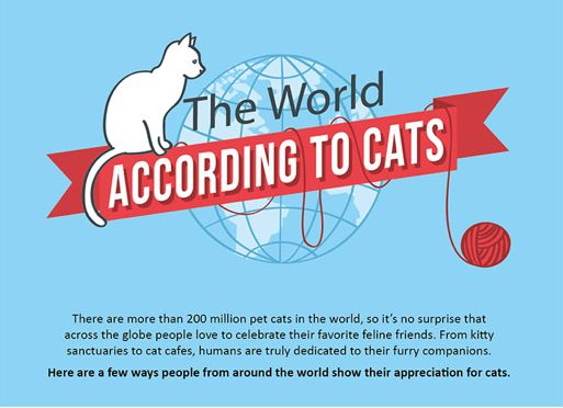 Worldly Feline Infographics