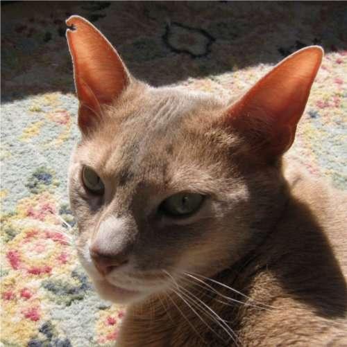 Feline Recluse Journals