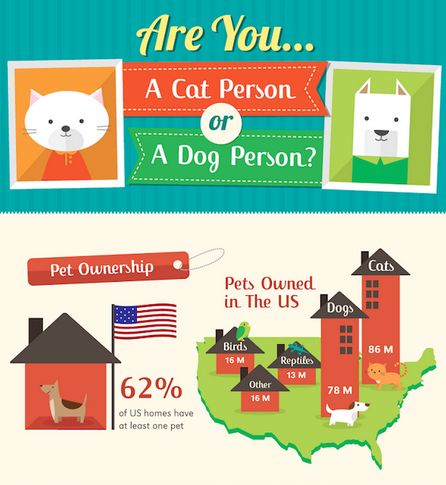 Pet Preference Infographics