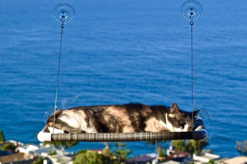 Window Pane Cat Beds