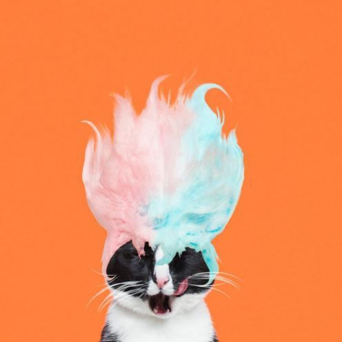 Costumed Cat Photography