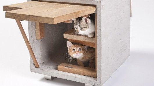Feline-Friendly Architecture