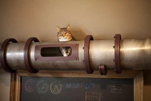 Feline Detour Tunnels