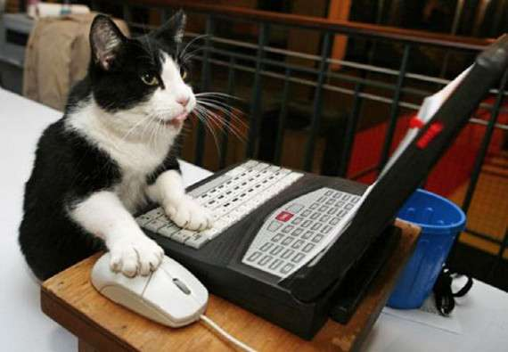 Internet Feline Competitions