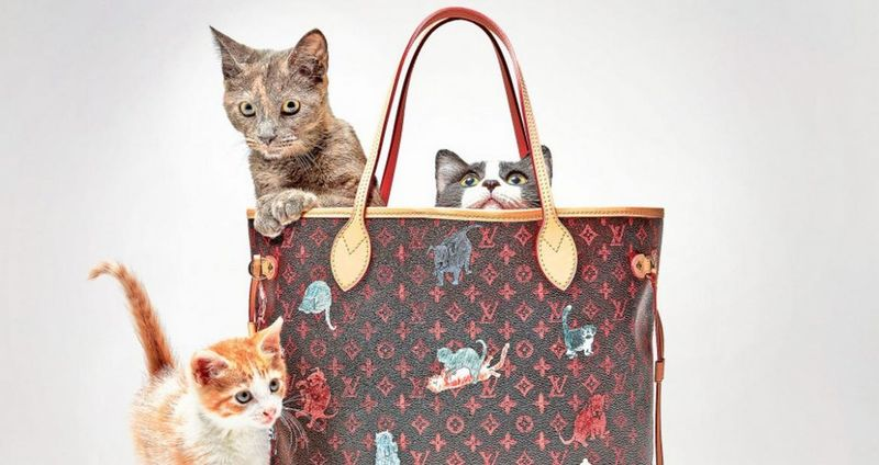 Feline-Focused Collections