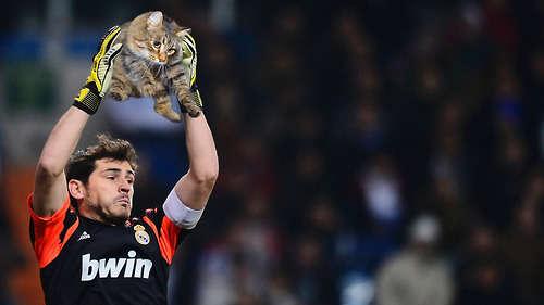 Athletic Kitten Captures