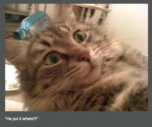 Perverted Pet Photoblogs