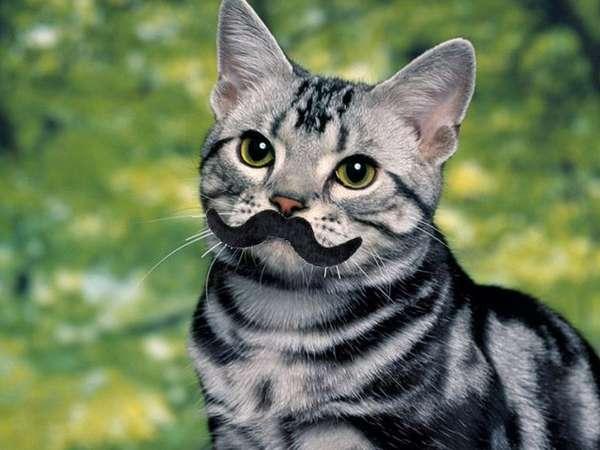 Faux-Stached Felines