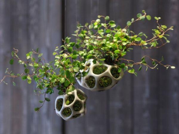 Skeletal Plant Holders