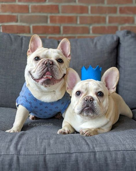 Charitable Puppy Pop-Ups
