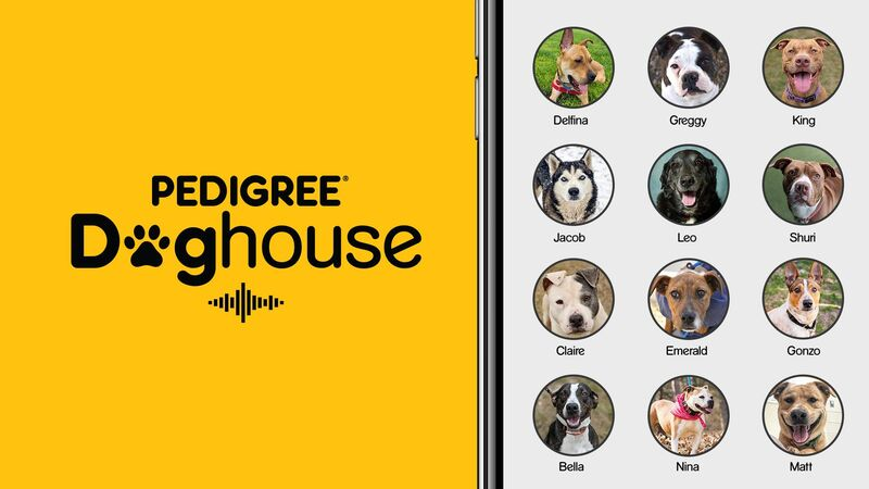 Dog-Friendly Chatroom Campaigns