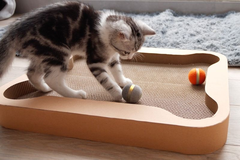 Interactive Feline Board Games