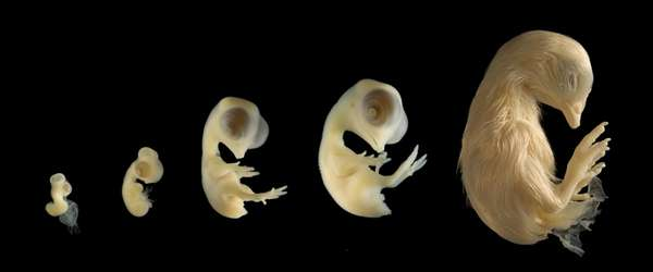 Animal Embryo Captures