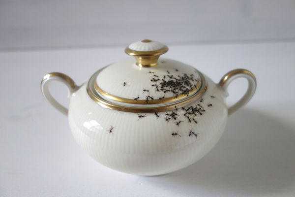 Insect-Infested Dishware