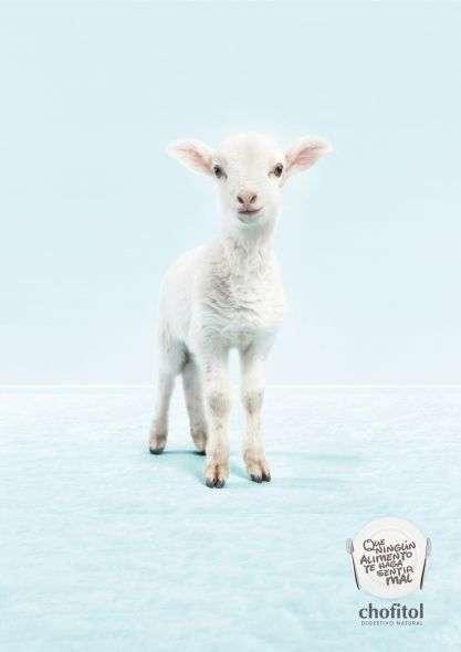 Adorable Animal Advertising