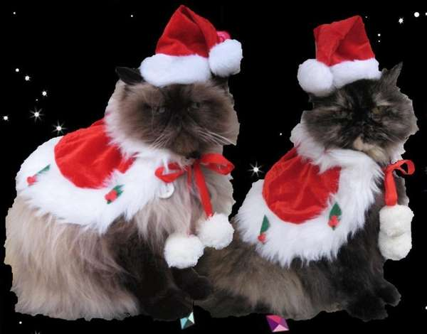 Festive Feline Attire