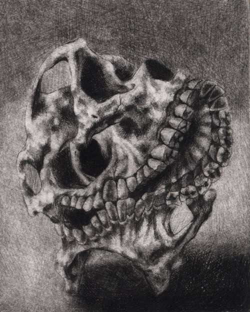 Mutated Skull Drawings