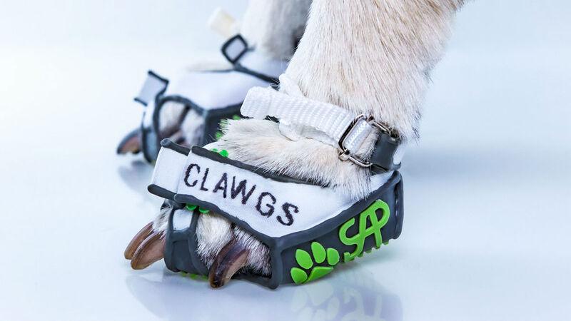 Flexible Canine Footwear